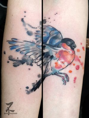 Merci Claudine pour ce petit projet mignon : un bouvreuil qui sautille et s'envole 💙🐦 Tattoo fait à Lille à la Bonbonnière en mars... #colortattoo #graphictattoo #colourfullife #inkedgirl #inked #inkedup #oiseau #welovebirds #birdstattoo #bouvreuil #finch #bullfinch #bird #aquarelle #watercolor #watercolortattoo #tattoo #tatouage #forearmtattoo #zeldablackjeanjacques #zeldabjj #tattooart #tattooartist #inksplash #inksplashtattoo #dripping #girlswithtattoos #tattoed #colorfull
