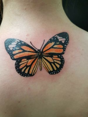Monarch butterfly piece thx for looking #colortattoos #realism #realistictattoos #butterflytattoo