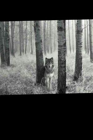 #Wolf #landscapetattoo #sleevetattoo