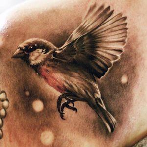 #realistic #sparrow #bird #OscarAkermo