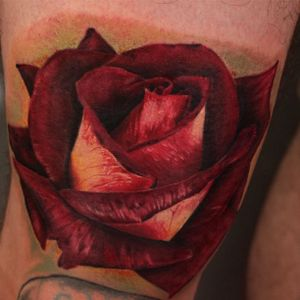 #red #rose #color #AnaliDeLaney
