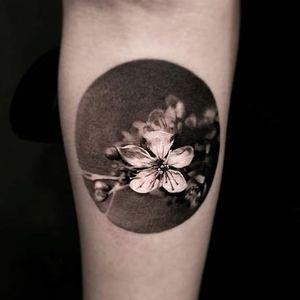 A circle snapshot from nature by Jeong Hwi Jeon. #cherryblossom #blackandgrey #JeongHwiJeon #realism #flower