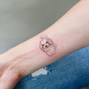 Cãozinho #Doy #gringo #cao #dog #cachorro #pet #petlover #doglover #miniature #miniatura #fineline
