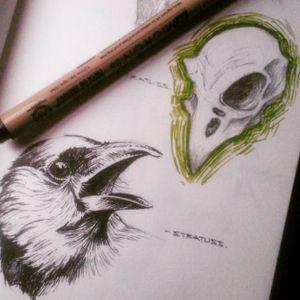 Bird and birdskull Illustration by Nathanael Hay @_stratuss_ on Instagram #birdskull #bird #illustration #illustrator #Stratuss
