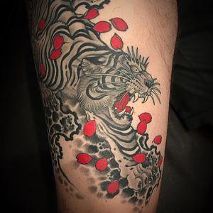 Angery tiger tattoo by Matt Beckerich #MattBeckerich #blackandgrey #Japanese #traditionaljapanese #irezumi #tiger #junglecat #cat #wildlife #fangs #cherryblossoms #petals #flower #redink #tattoooftheday