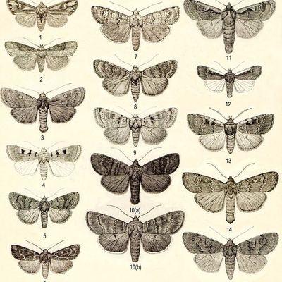Vários tipos de mariposa #mariposa #moth #inseto #bug #deathmoth