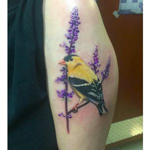 Goldfinch tattoo (via IG -- kmarsh54) #bird #birdtattoo #goldfinch #goldfinchtattoo
