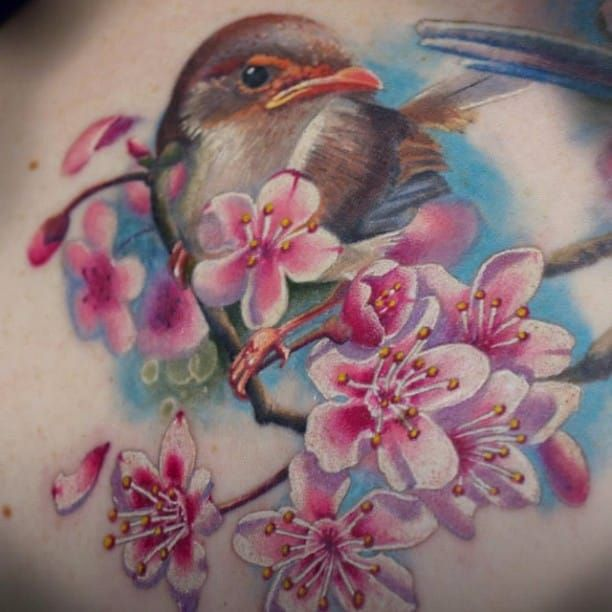 A Fairy Wren perched on a cherry blossom branch. By Frederick Bain #FrederickBain #realism #colorrealism #bird #cherryblosom #wren #FairyWren