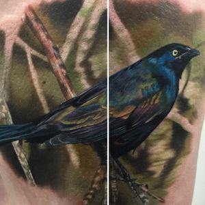 Astoundingly intricate coloration on this blackbird from Vic Vivid's (IG—vicvivid) portfolio. #blackbird #color #realism #songbirds #VicVivid
