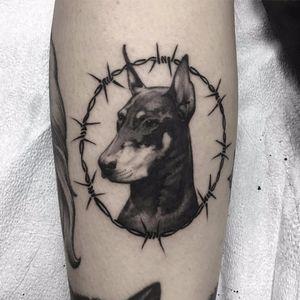 Doberman by Santa Rosa Tattoo #SantaRosaTattoo #blackandgrey #realism #realistic #petportrait #dog #animal #barbedwire #doberman #tattoooftheday