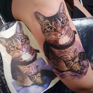 Kitty love by Led Coult #LedCoult #color #realism #realistic #hyperrealism #photorealism #cat #kitty #petportrait #animal #fur #tattoooftheday