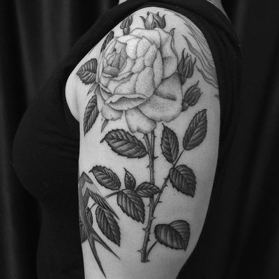 Rose tatto by Antoine Elvy #AntoineElvy #rosetattoos #blackandgrey #illustrative #rose #flower #floral #leaves #plant #sparrow #bird #feathers #nature #wings #thorns
