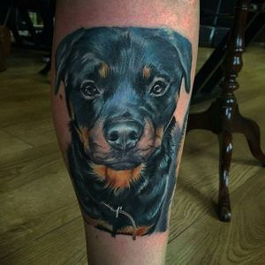 Painterly color realism rottweiler portrait by Chris Smith. #realism #colorrealism #painterly #dog #rottweiler #ChrisSmith