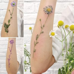 Daisy tattoo by Rit Kit #RitKit #flower #plant #botanical #nature