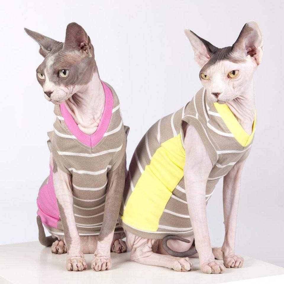 Irmãos Sphynx #Sphynx #Sphynxcat #saynotoanimaltattoos #gato