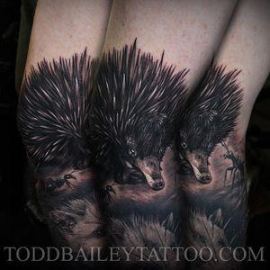 Bold black and grey realism echidna tattoo by Todd Bailey. #echidna #Australiananimal #Australiafauna #realism #blackandgrey #blacandgreyrealism #ToddBailey