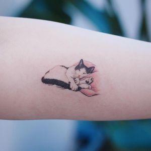 Sleepy baby kitty tattoo by Saegeemtattoo #Saegeemtattoo #cattattoos #color #realism #realistic #hyperrealism #petportrait #sleeping #kitty #cat #cute #animal