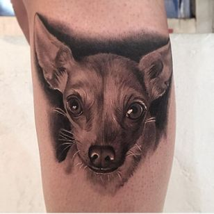 Chihuahua pet portrait by Jamie Mahood. #blackandgrey #realism #JamieMahood #pet #dog #chihuahua