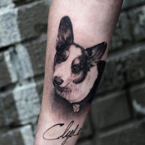 A lovely portrait of Clyde, the dog, by Oscar Akermo (IG-oscarakermo). #blackandgrey #corgi #OscarAkermo #portraiture #realism
