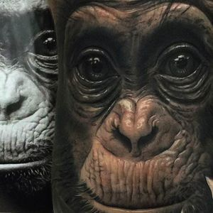 Incredible detail work on this chimp portrait tattoo done by Fred Tomas. #FredyTomas #ExoticTattoo #realistictattoo #animalportrait #chimpanzee