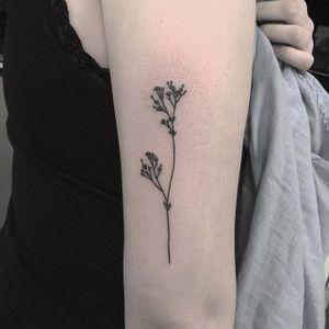 Handpoked tattoo by Cate Webb. #CateWebb #linework #handpoke #sticknpoke #handpoketattooartist
