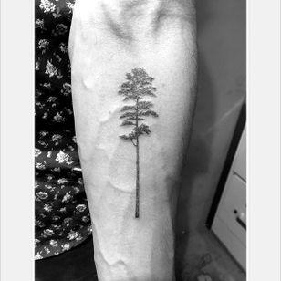 Longleaf pine tree by Daniel Winter. #singleneedle #fineline #linework #DanielWinter #tree #longleafpine