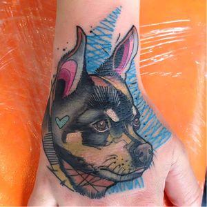 #Schwein #tatuadorgringo #coloridas #colorful #sketch #abstrata #abstract #cachorro #dog #pinscher