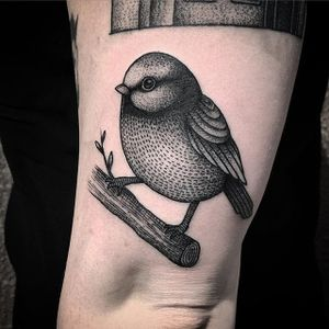 Bird Tattoo by Will Pacheco #bird #birdtattoo #blackwork #blackworktattoo #blackworktattoos #blackink #blackinktattoo #blackworkartist #WillPacheco