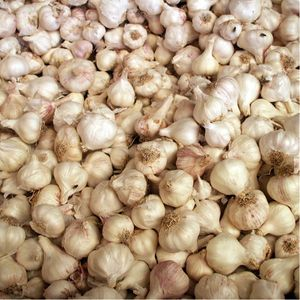 Garlic - worth the smelly breath! (Image: FreeImages) #garlic #healthy #foodie #vegetable