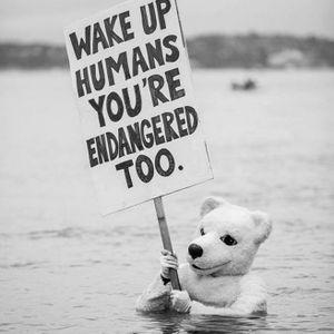 Quirky but super real climate change image via Pintrest #climatechange #polarbear #endangered