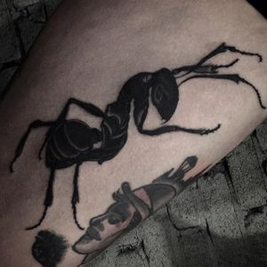 Ant Tattoo by Aru Tattoo #ant #insect #bug #blackworkinsect #blackinsect #creatures #Aru #AruTattoo