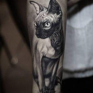 Hairless sphynx by Stefano Alcantara (Via IG - stefanoalcantara) #blackandgrey