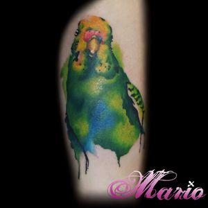 Aquarela de responsa! #InkedByMario #MarioGregor #aquarela #watercolor #TatuadorGringo #colorida #colorful #passaro #bird