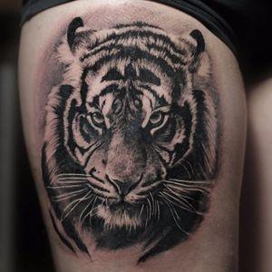 Scowling tiger, by Angelique Grimm. (via IG—angeliquegrimmtattoo) #blackandgrey #realism #animal #portrait #angeliquegrimm