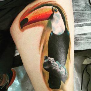 Color realism toucan tattoo by Rodrigo Donadon. #realism #colorrealism #bird #toucan #RodrigoDonadon