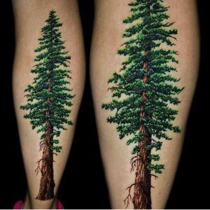 Artist #JamieSchene #tree #nature