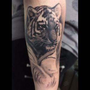 A tiger cub for Gemma from last month. #lewishazlewood #lewishazlewoodtattoo #staganddaggertattoo #somerset #uk #blackandgrey #blackandgreytattoo #blackandgray #blackandgraytattoo #bng #bngtattoo #tiger #tigercub #tigertattoo #tigercubtattoo #cub #cubtattoo #realistic #realistictattoo #realistictiger #blackandgreyrealism