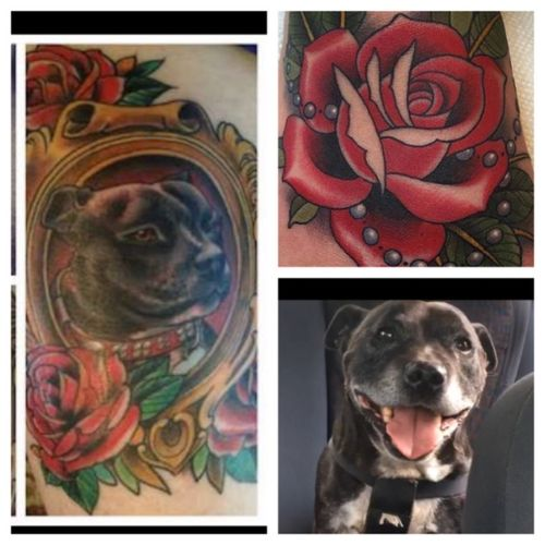 This is my 12 and a half year old staffy Zeke. He is my best friend, and he has been with me through everything. From being bullied in high school, to my mum having a major stroke whilst being operated on for a brain hemorage and being in a coma, Zeke has never left my side. Id love so much to have a portrait like the one on the left, but with Zeke's gorgous smiling face and some roses. I love roses and we often pick them together. I would be honered to have Megan tattoo a potrait of my best friend on me, so i will always have him with me 💙🐶 #MEGANDREAMATTOO #meganmasaacre #staffy #love