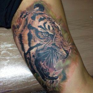 #tiger #bishoprotary #realism