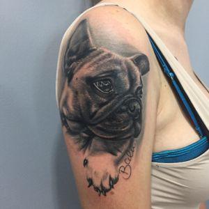 Balu #fusionink #bishoprotary #dog