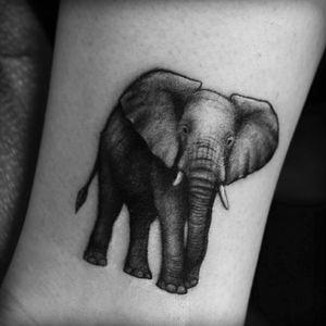 By Lazerliz #elephant