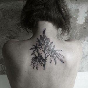 Hieronymus Dóch Tattoo #weed #plant #linework #HieronymusDóch #hd #394