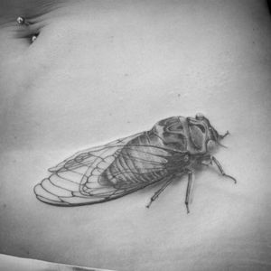 #tattoo #cicada #cicadatattoo #cigale #lespetitspointsdefanny