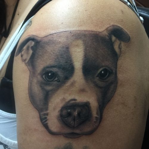 Portrait of my clients pitbull #blackandgrey #blackandgreytattoos #blackandgreyrealism #bloodhoundirons #dogportrait #pitbulltattoo #memorialtattoo
