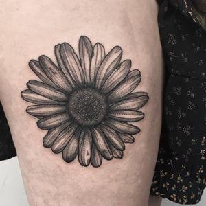 Sunflower 🌼