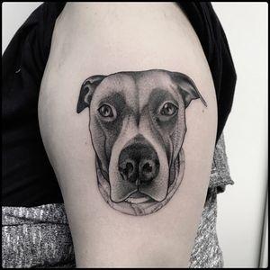 #totemica #tunguska #black #dog #portrait #pet #riot #tattoo #blackworkers #originalsintattooshop