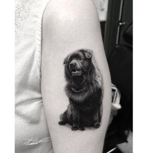 Dr Woo #dog #petportrait