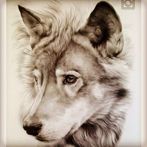 #megandreamtattoo Lone wolf