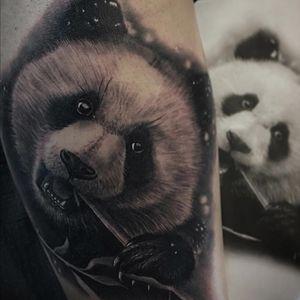 @radiantcolorsink @vegantattoo @latintaquehabito #bgis #tattoo_art_worldwide #radtattoos #tattooistartmag #jumillaolivares #thebesttattooartist #valenciatattoo #tattoovalencia #bnginksociety #superbtattoos #tattooartistmagazine #toptattooartist #inkstagram #ink #tattooed #tattoo_artwork #tattoo #tatuajes #tattooed #bestoftheday #art #tattooist #inked #realism