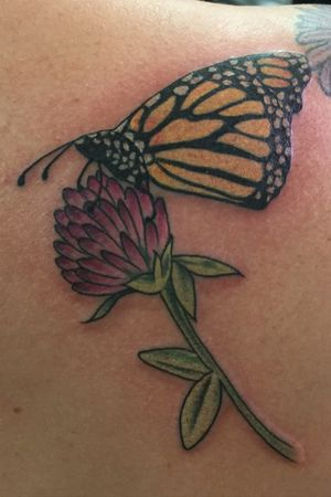 #Monarch #butterfly on #redclover #clover #Vermont #insect #cloverflower